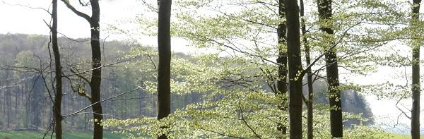 Bild mit Waldblick